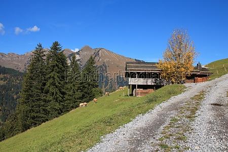 rural autumn scene near gstaad