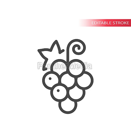 grape line vector icon