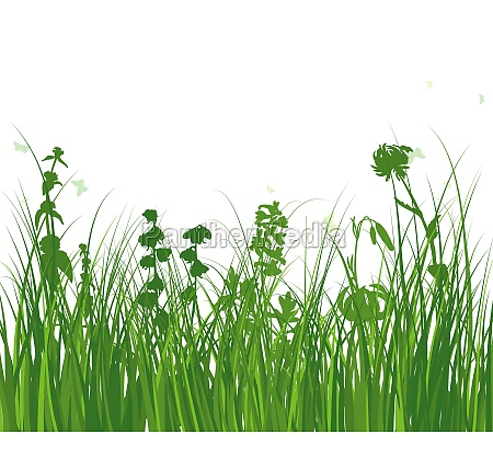 green grass meadow