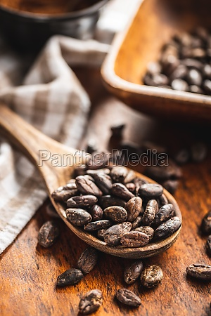 roasted cocoa beans in wooden spoon