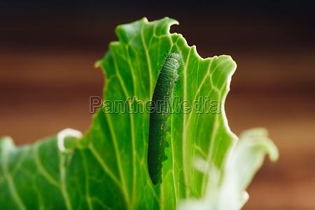 green caterpillar crawling on a leaf