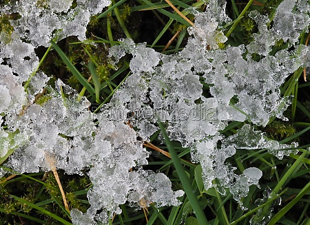 ice in the grass