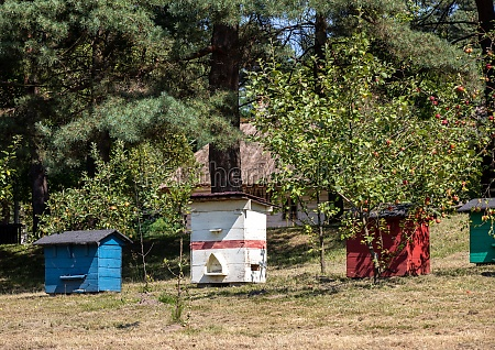 an apiary with old wooden hives