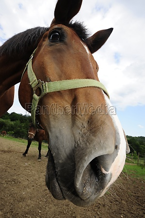 horse standing on a paddock
