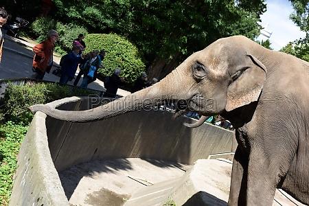 elefanten im tierpark hagenbeck in hamburg