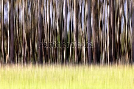 blurred trees trees blurred closeup