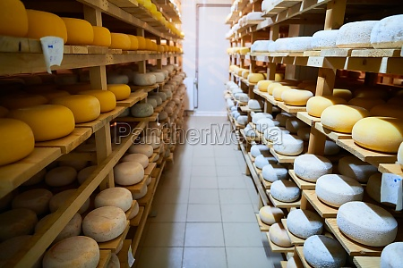 cheese factory production shelves with aging