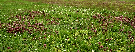 spring meadow with colorful wildflowers