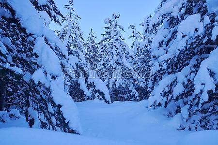 winter night landscape nature forest