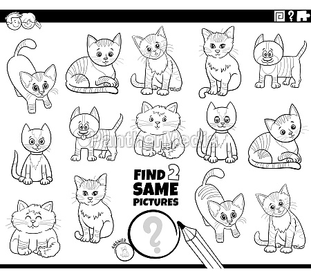 find two same cats characters game