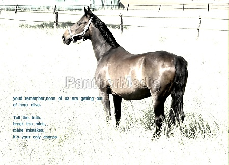 horse with a quote