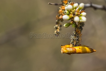 interesting blossom in the sun detail