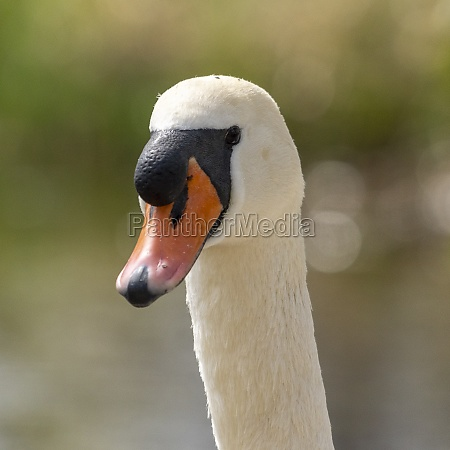 close up of a duck in