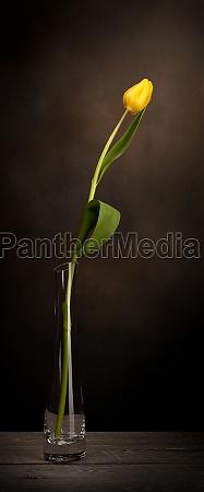 a tulip in a vase classic