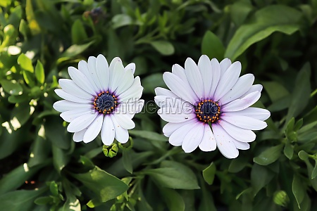 background of two purple and white