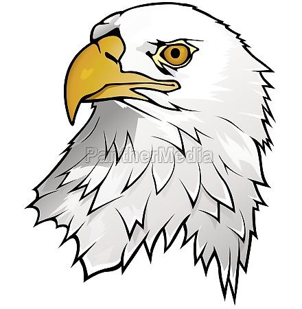 bald eagle portrait illustration