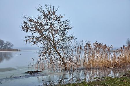 misty autumn river landscape