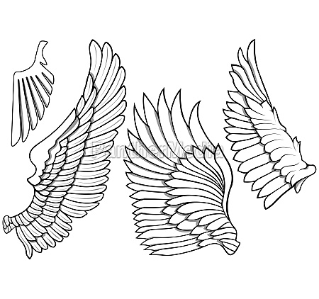 black and white wing icons