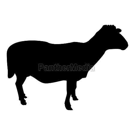 silhouette sheep ewe domestic livestock farm