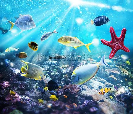 marine, life - 29839187