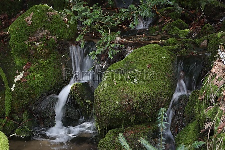 beautiful forest of trees rivers waterfalls