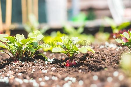 urban gardening organic snail and slug
