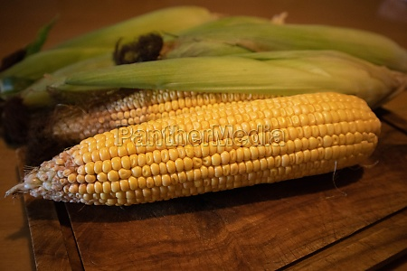 fresh tender yellow corn on the