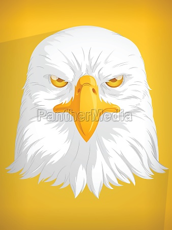 eagle head hawk falcon cartoon front