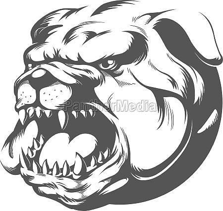wild angry bull dog barking silhouette