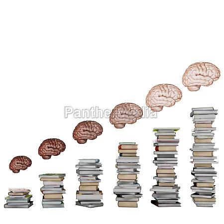 development of brain