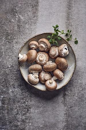 fresh mushrooms on a ceramic plate