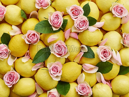 lemons and pink rose petals with