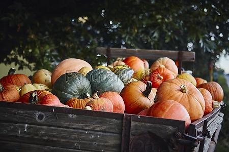 different, pumpkins, on, a, wooden, cart - 29877803