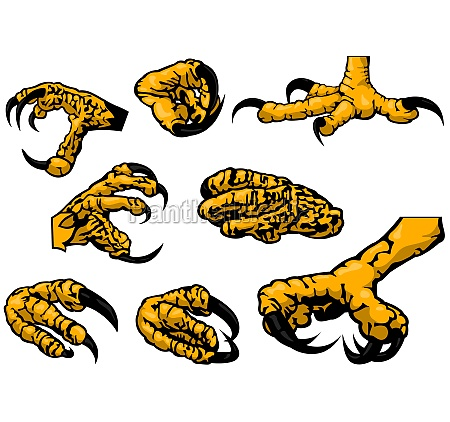 colored set of eagle claws