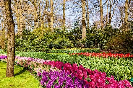 blooming flowering tree in local park