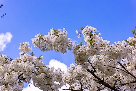 beautiful garden flowers spring background