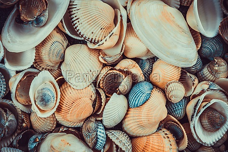 variety of sea shells from beach