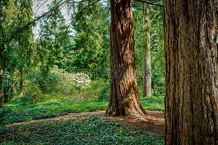 dark green forest landscape wild forest