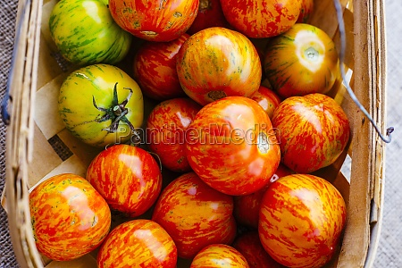 beautiful homegrown tomatoes with red yellow