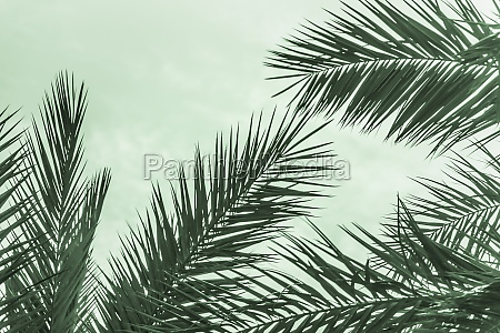 tropical tourism paradise palms in sunny