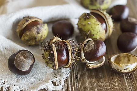 horse chestnuts with cases on a
