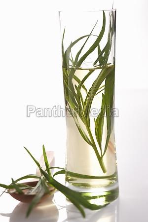 homemade tarragon vinegar in a cylindrical