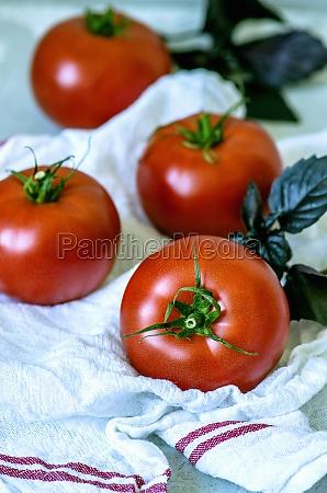 fresh ripe tomatoes and purple basil