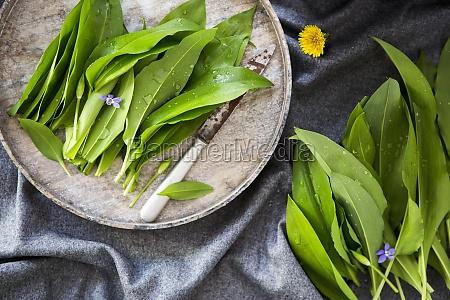 fresh ramsons wild garlic