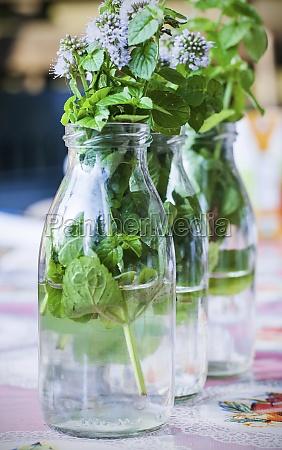 wild herbs in a bottles of