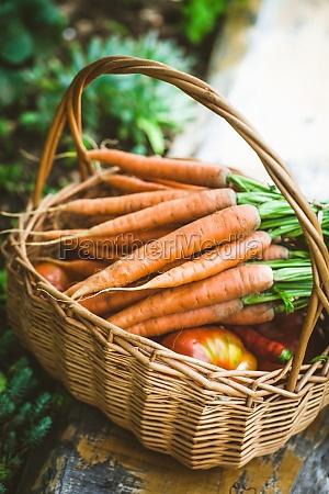 fresh carrots in basket