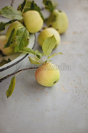 yellow apples with branches in a