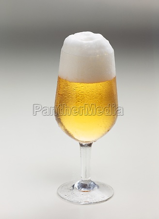freshly poured pilsner in the glass