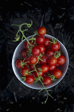 fresh cherry tomatoes in a small