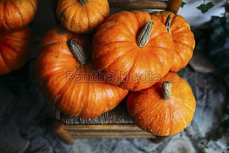 shiny orange pumpkins composed on chairs